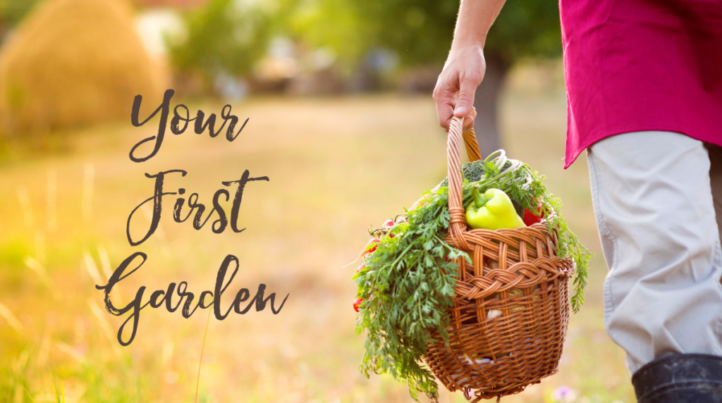Your First Spring Garden – Tips for Beginners!